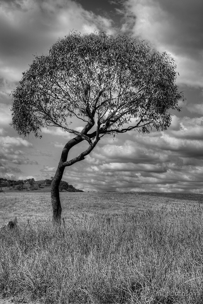 Character -  Somewhere Near Oberon, NSW - THe HDR Experience by Philip Johnson