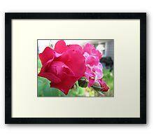 Kennebunk Beach Rose Framed Print