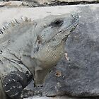 Iguana in Mexico by Darkwing717