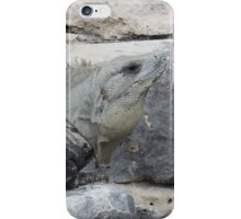 Iguana in Mexico iPhone Case/Skin