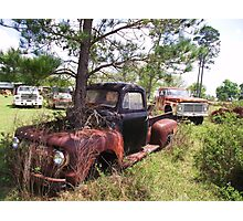 TREE FORD Photographic Print
