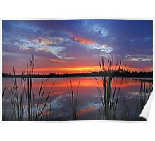 sunset among the reeds Poster