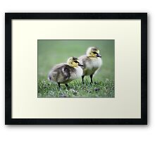 Another lesson learned Framed Print