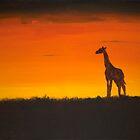 Giraffe Sunset by Hannah Ruth