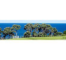 pohutukawa trees Photographic Print