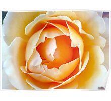 Peach Petals Poster