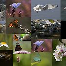 Top Twenty - 2015 by Neil Bygrave (NATURELENS)