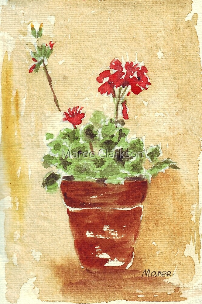 Why grow geraniums in containers? by Maree Clarkson