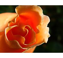 Curly Sue Photographic Print