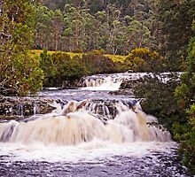 The Cascades - Pencil Pine Creek, Cradle Mountain by TonyCrehan