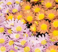 Floral Overflow - Happy Pink and Orange Autumn Mums Sticker