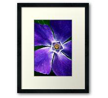 Purple Periwinkle Framed Print