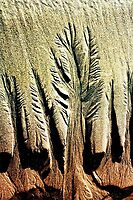 Sand trees by SouthernScape