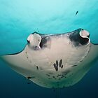Manta Ray by MattTworkowski