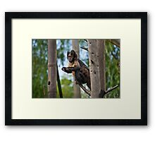 Buffy Headed Capuchin Framed Print