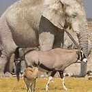 """White"" Elephants in salt pan by Anita Deppe"