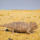 Chameleon in Namib Desert by Anita Deppe