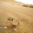 Transparent Gecko in Namib Desert by Anita Deppe