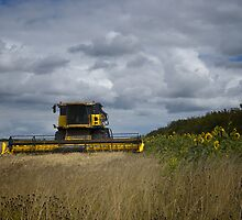 Combine and Sunflowers by Nigel Bangert