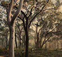 Misty Trees - colour version by Tam  Locke