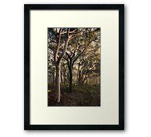 Misty Trees - colour version Framed Print