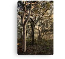 Misty Trees - colour version Canvas Print