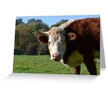 Cow Greeting Card Greeting Card