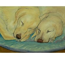 Two Labradors are better than one Photographic Print