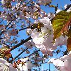 The Spring Mood by Irina777