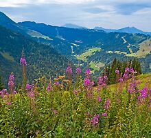 Summertime in the Alps (II) by Konstantinos Arvanitopoulos
