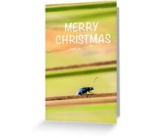 Merry Christmas Beetle Greeting Card