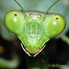 Close to a grasshopper. by debjyotinayak