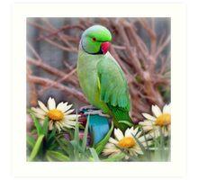 Pretty Please - (Parakeet) Art Print