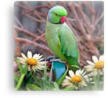 Pretty Please - (Parakeet) Metal Print