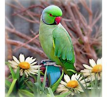 Pretty Please - (Parakeet) Photographic Print