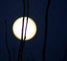 Moon Trees by NumandisArt