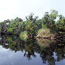 St. John's River by Kristy Dalpez
