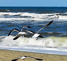 into the wind... the joy of flight by WonderlandGlass