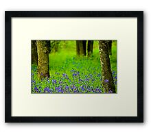 A Little Bit Of Spring Framed Print