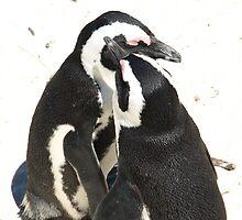Penguin Love for Life by RachelSheree