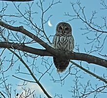 Barred Owl and Moon by Carol Bock