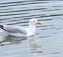 Seagull Enjoying A Swim by Honor Kyne