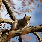 Squirrel in a Tree by RachelSheree