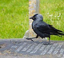 Grave Dancing by Susie Peek