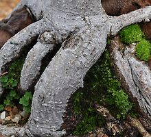 Tree trunk.. by Karen01