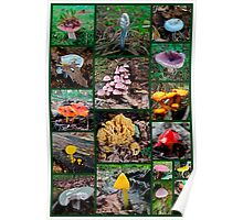 Pennsylvania Mushrooms Collage #2 Poster