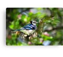 Colorful Spring Blue Jay Bird Art Canvas Print