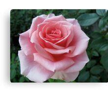 Mozart Rose Canvas Print