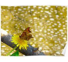 Flotsam and Jetsam Butterflies Poster
