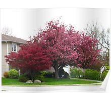 Spring Splendour Poster